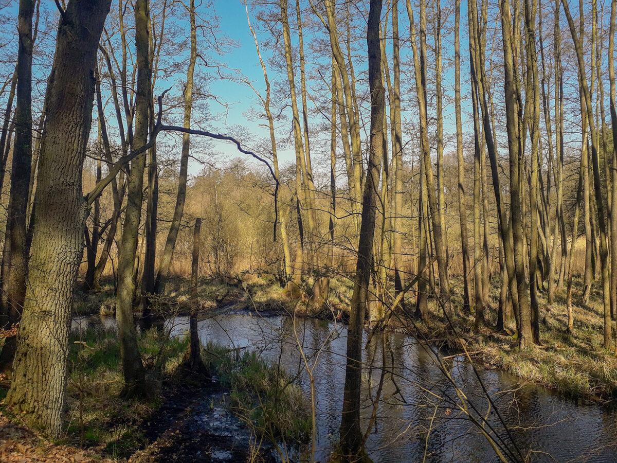 Wald und Gewässer im Biesenthaler Becken im schönen Naturpark Barnim, Barnimer Land, Brandenburg.