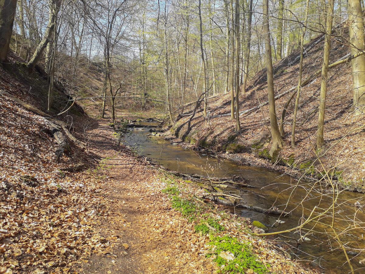 Wald und Fließ im Biesenthaler Becken im schönen Naturpark Barnim, Barnimer Land, Brandenburg.