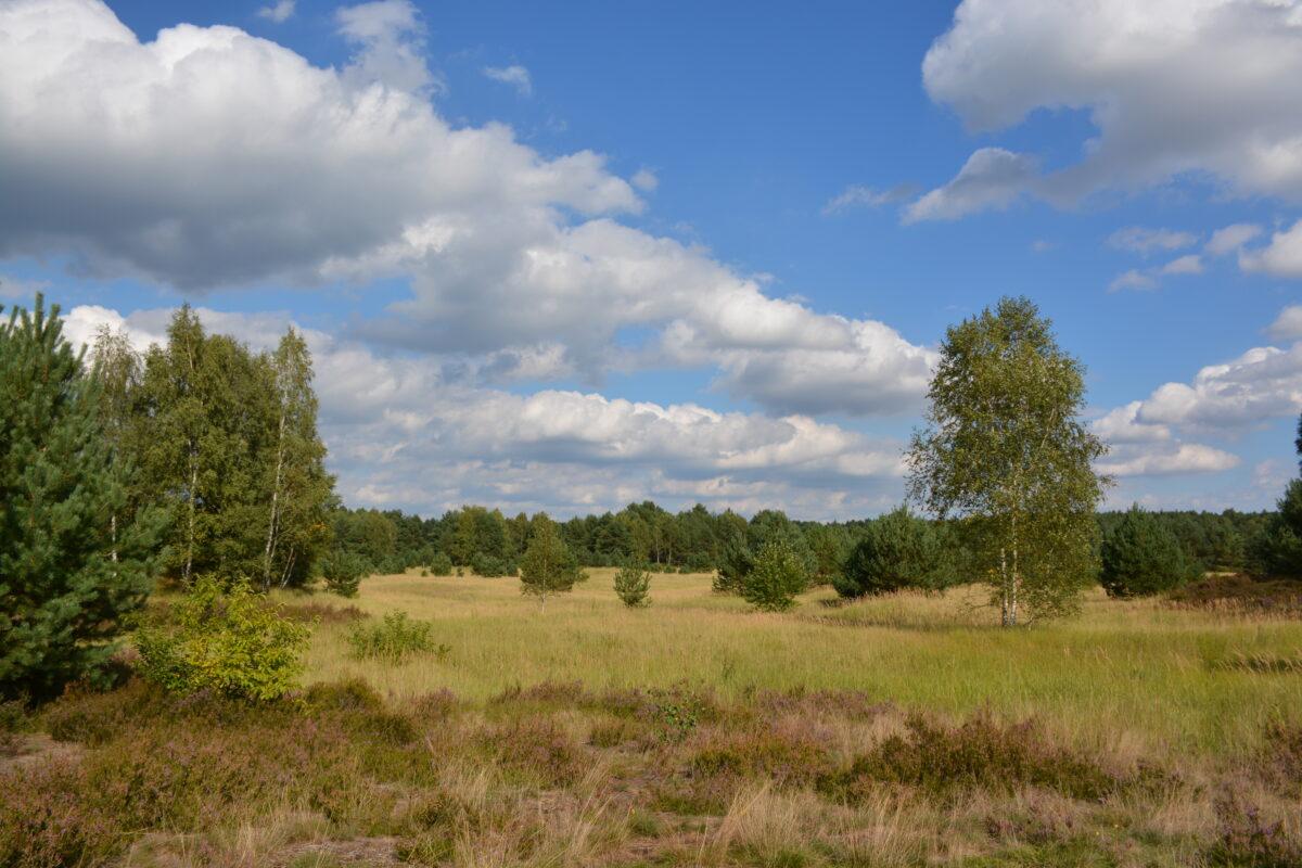 Schönower Heide