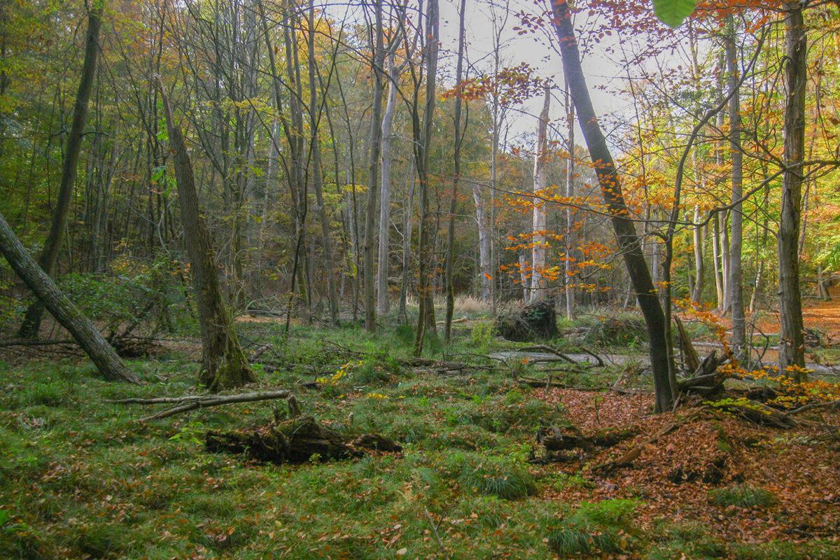 Das Nonnenfließ im schönen Naturpark Barnim, Barnimer Land, Brandenburg.