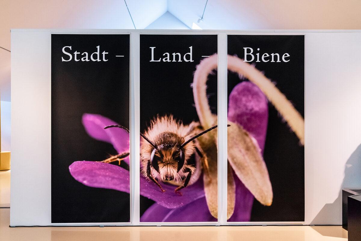 Ausstellung zum Thema Bienen im Wandlitzer Barnim Panorama, im schönen Naturpark Barnim, Barnimer Land, Brandenburg.