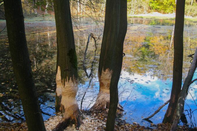 Das Herthafließ im schönen Naturpark Barnim, Barnimer Land, Brandenburg.