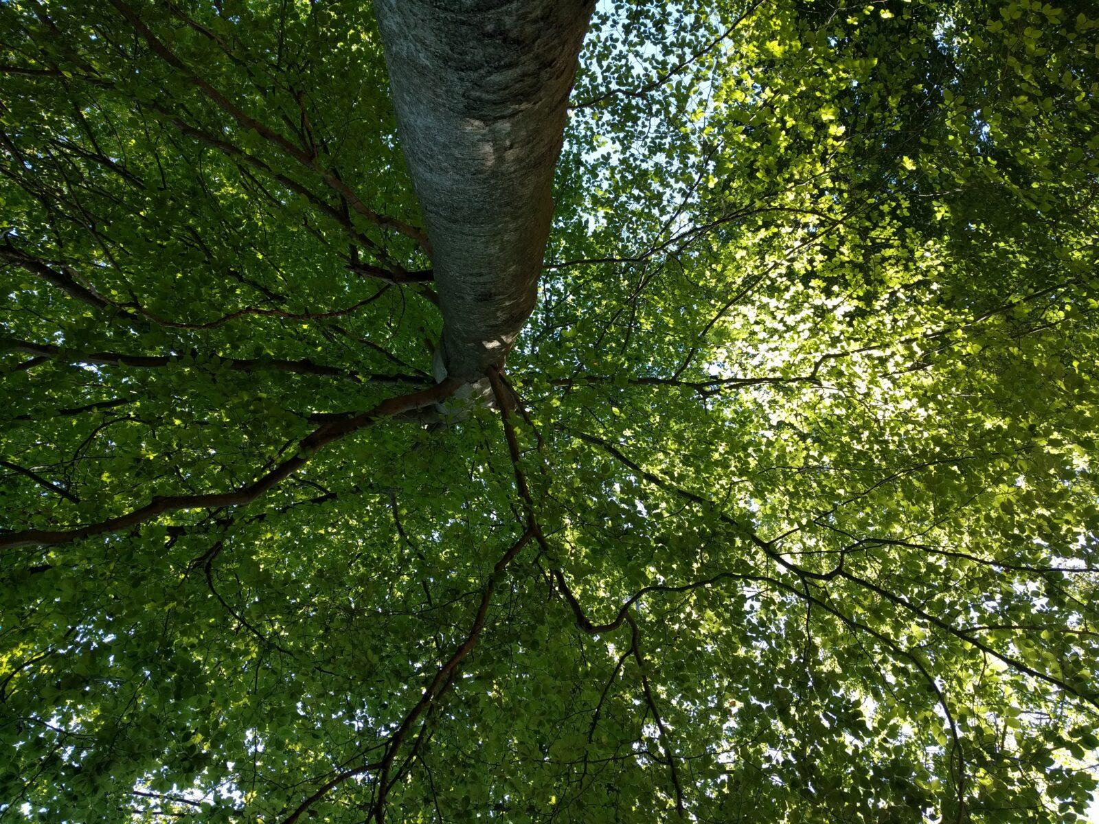 Waldwanderungen mit Oberförster Klaus und Dackel Waldi