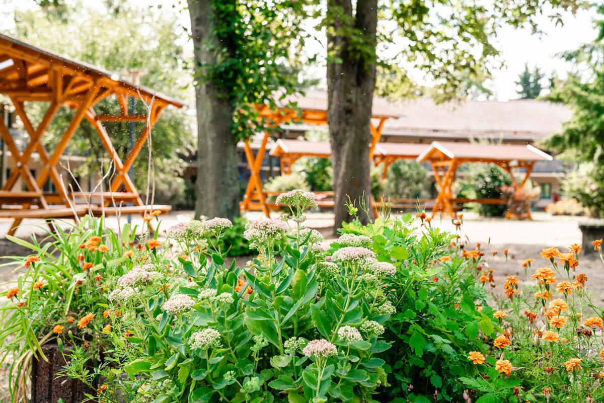 Blumen im Außenbereich der Jugendherberge in Wandlitz, im schönen Naturpark Barnim, Barnimer Land, Brandenburg.