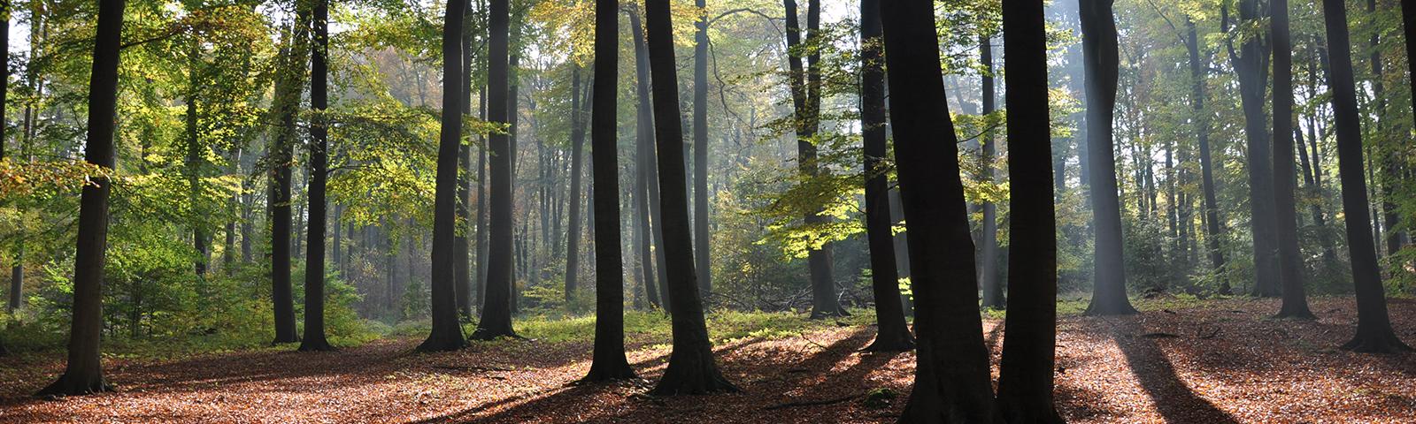 Wandern im Naturpark Barnim