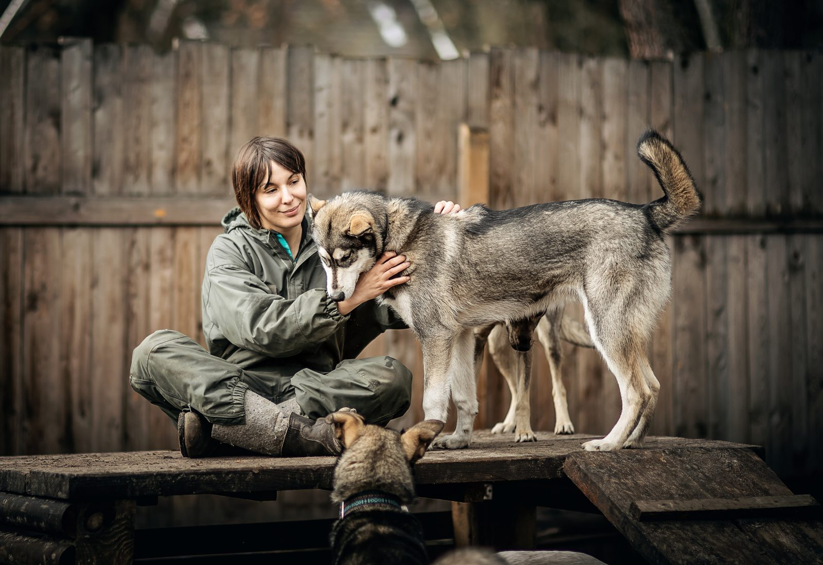 Husky-Abenteuer | Wandlitz
